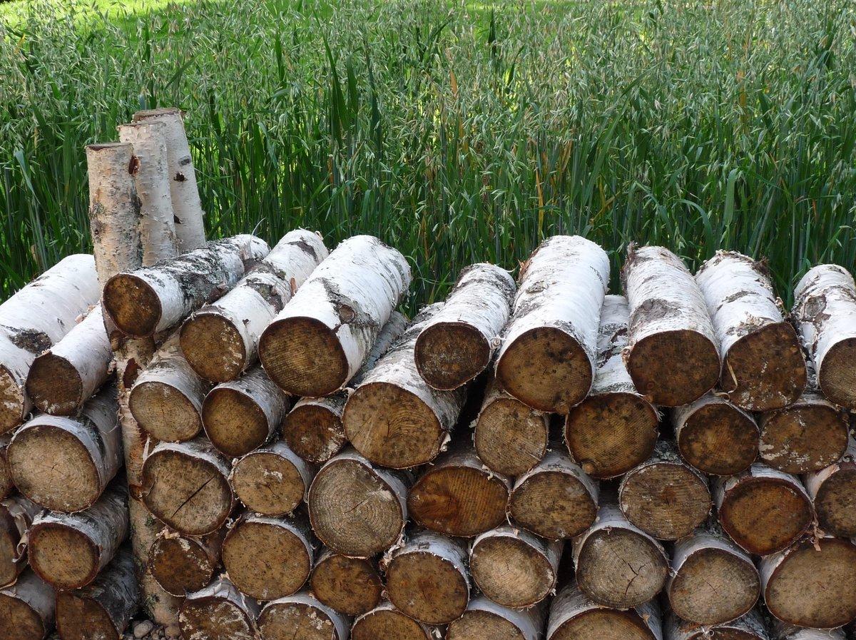 selber brennholz machen: stadt riedstadt